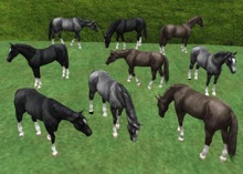 Horse Package - Mesh - Full Perm
