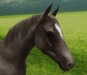 Horse close up face