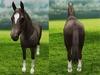 Horse front back