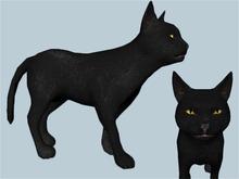 Black Cat - Mesh - Full Perm