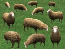 Sheep Pack - Mesh - Full Perm