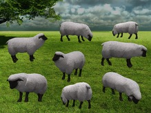 Black Face Sheep Pack - Mesh - Full Perm