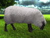 Black face sheep grazing pic 1