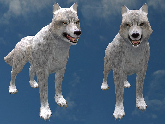 White Wolf - Mesh - Full Perm