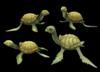 Turtle family main