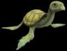 Turtle mum 2