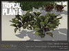 Tropical plants pack 2 4