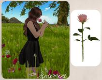 Single Rose - animated (Orange)