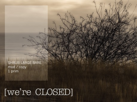 [we're CLOSED] shrub large bare