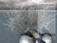 [we're CLOSED] shrub large winter