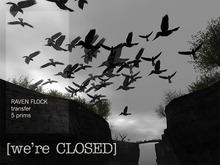 [we're CLOSED] raven flock - transfer