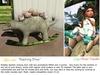 "Aphrodite ""Ridding with dinos"" Kids rocking dinosaur toy"