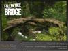 Fallen tree bridge 1