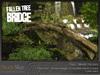 Fallen tree bridge 2