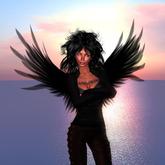 Jaali 2 Wings Flexy, Flap