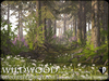 Wildwood giant deep forest pines summer a2