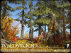 Wildwood giant deep forest pines autumn a1