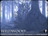 Wildwood giant deep forest pines winter a1