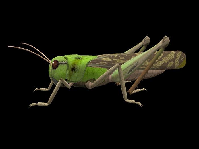 Cricket - Mesh - Full Perm