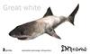 :: 2Xtreme :: freeswimming shark box