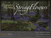 Skye enchanted woods spring flower 4