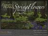 Skye enchanted woods spring flower 3