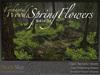 Skye enchanted woods spring flower 5