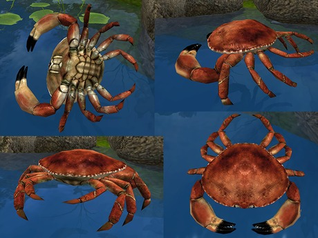 Crab - Mesh - Full Perm
