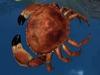 Crab pic 1