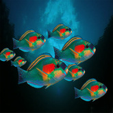 8 Tropical Parrot fish - fish shoal