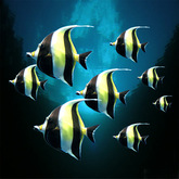 Fische: 8 tropical Yellow-Black fishes, r-m-system  (m/tr)