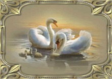 "Animated picture ""Swans on the lake"" (MeshFrame)"