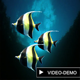 fishs, 3 tropical Yellow-Black fishes, r-m-system  (m/tr)