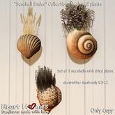 "<Heart Homes> ""Seashell Finders""  Deco Shell wall plants  (Copy)"