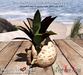 "<Heart Homes> ""Sailors Seashell Finders"" Deco Plant (Copy)"