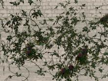 Goth rose thorn black