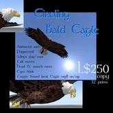 Circling Bald Eagle (Animated)