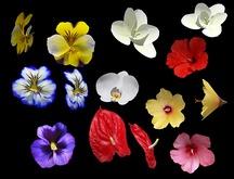 Flowers Only Pack 2 Builders Kit - Full Perm