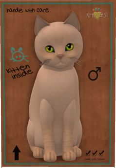 KittyCatS Box - 4T Balinese - Cream Lynx