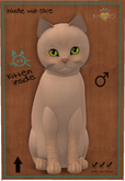 KittyCatS Box - 4T Male Kitten Balinese - Cream Lynx