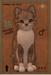 3t male kitten american shorthair cream white tabby