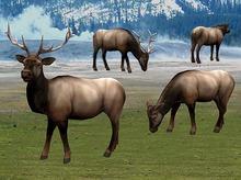 Elk Pack - Mesh - Full Perm
