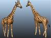 Giraffe main