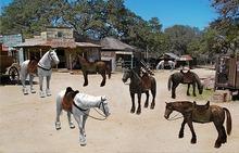 Riding Horse Pack - Mesh - Full Perm
