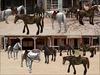 New horse main2