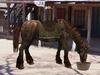 Horse 1 pic