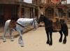Horses 2 pic