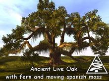 Ancient Virginia Live Oak M/T