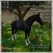 Animated Horse Black