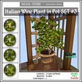 SaCaYa's Italian Wine Plant in Pot SET #3